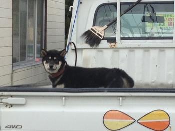 荷台犬1.jpg